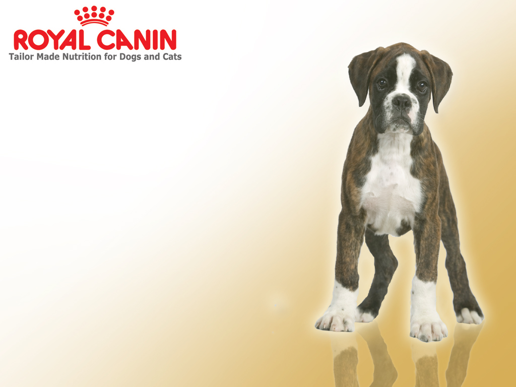 Class Action Lawsuit: Royal Canin