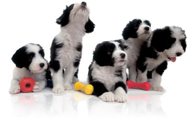 Puppies-with-toys-ROYAL-CANIN®