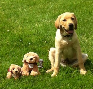 puppy and stuffed toys