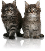 kitten-siblings-ROYAL-CANIN®