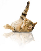 cat-playing-ROYAL-CANIN®