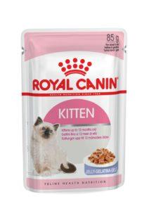 Kitten in jelly pouch cat food