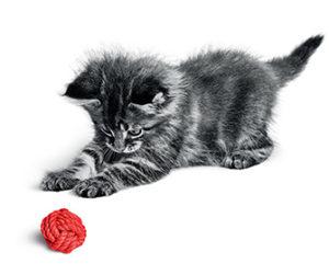 kitten-growth