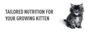 kitten-growth-banner