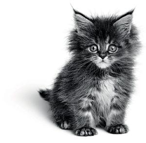royal-canin-outdoors-kitten