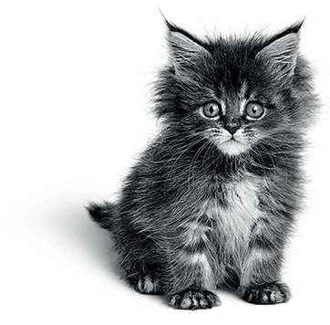 kitten-stock