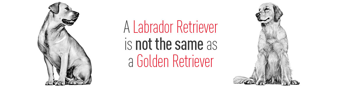 A Labrador Retriever is not the same as a Golden Retriever