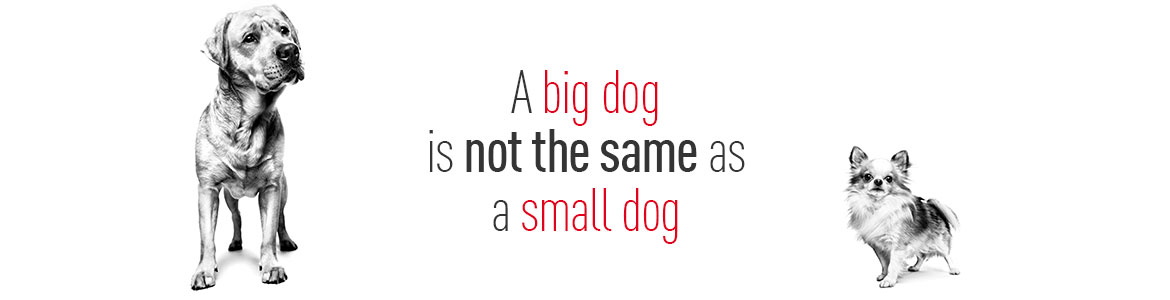A big dog is not the same as a small dog