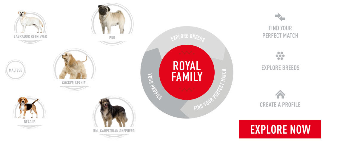 Explore the Royal Family - perfect match, explore breeds, create a profile