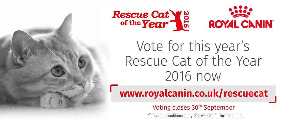 Rescue Cat of the Year