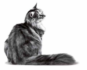 royal-canin-groomed-cat