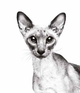 royal-canin-sphynx-cat