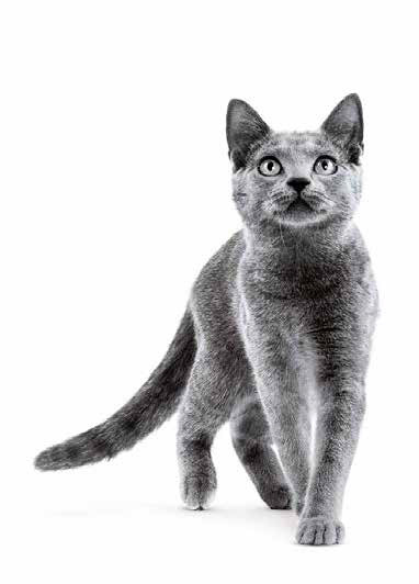 Grey cat ROYAL CANIN®