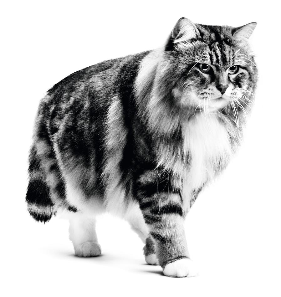 schizophrenia and cats
