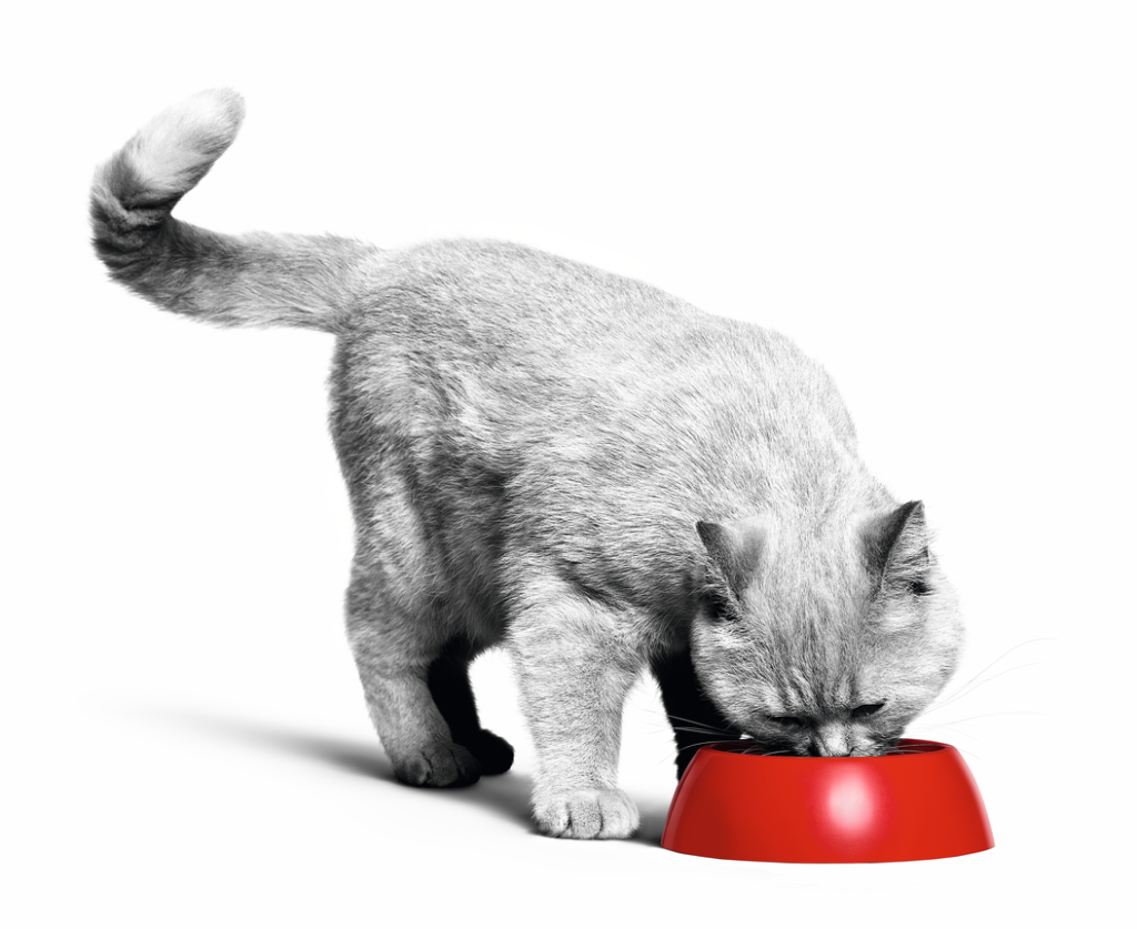 Cat Food Portions Weight Loss
