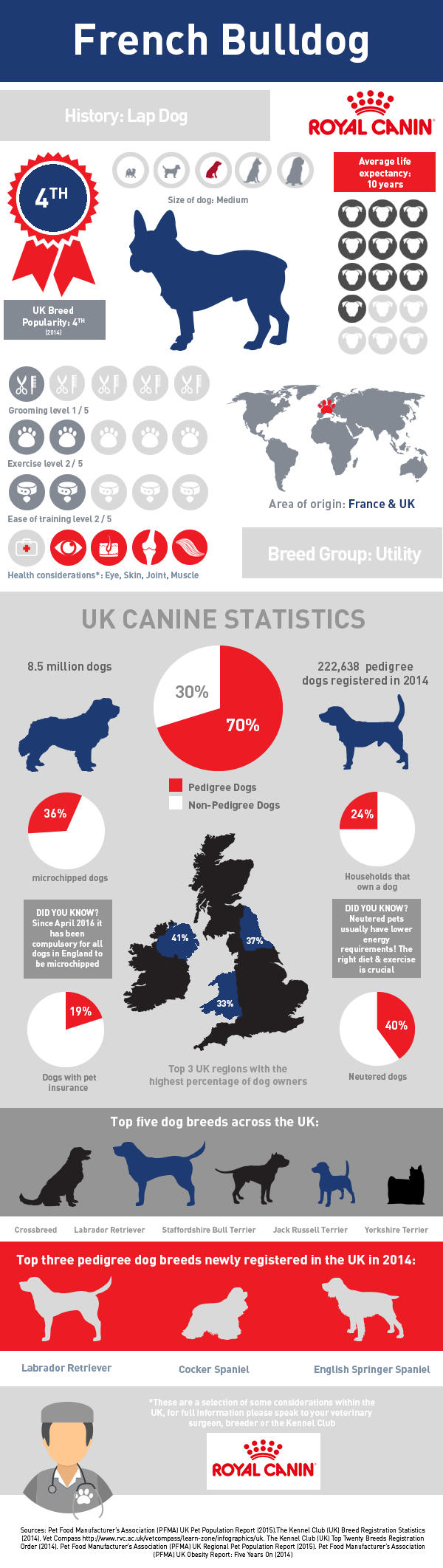 infographic-french-bulldog