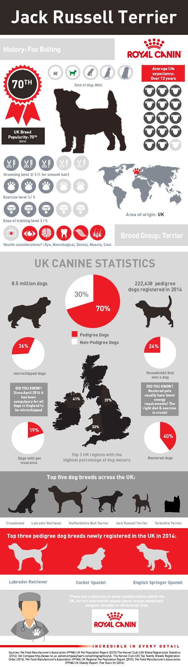 infographic-jack-russell-terrier
