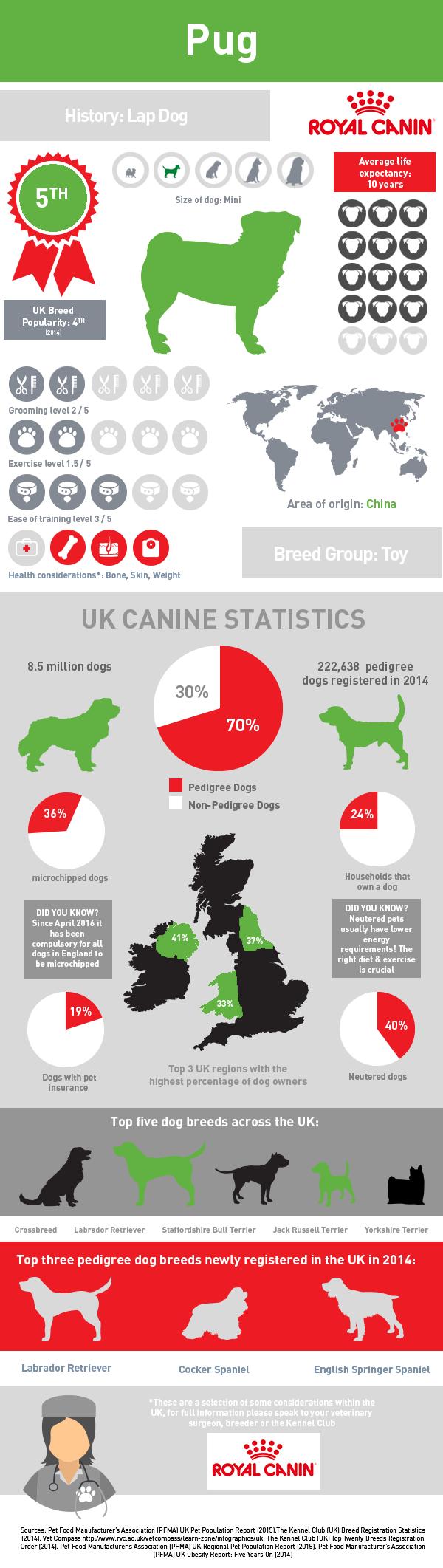 infographic-pug
