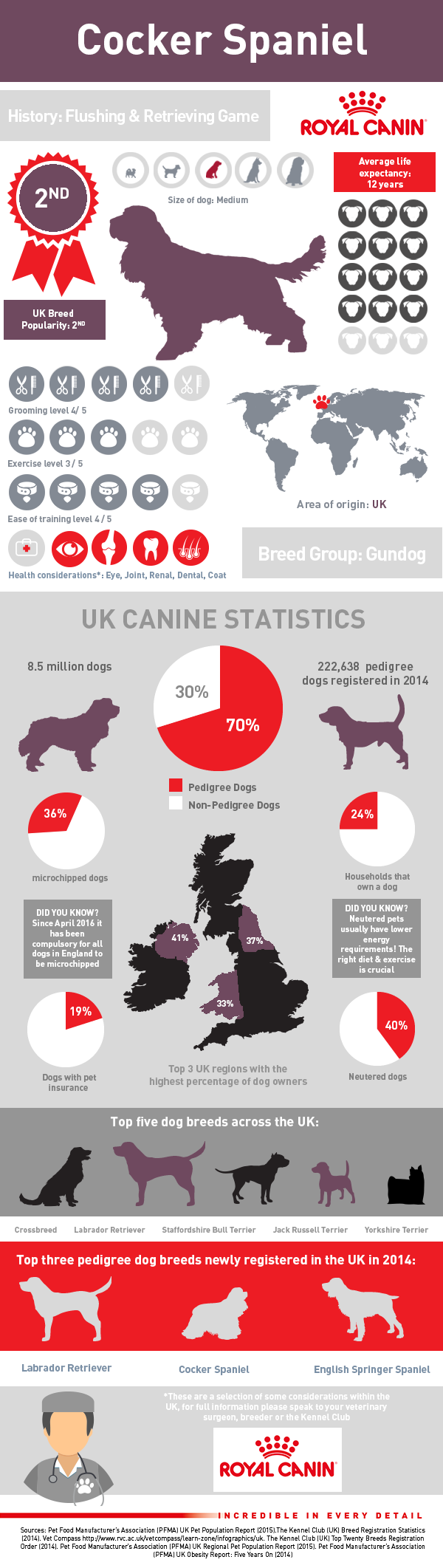 infographic-cocker-spaniel