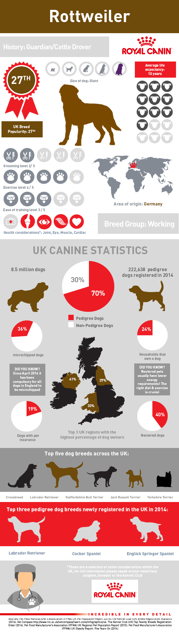 infographic-rottweiler