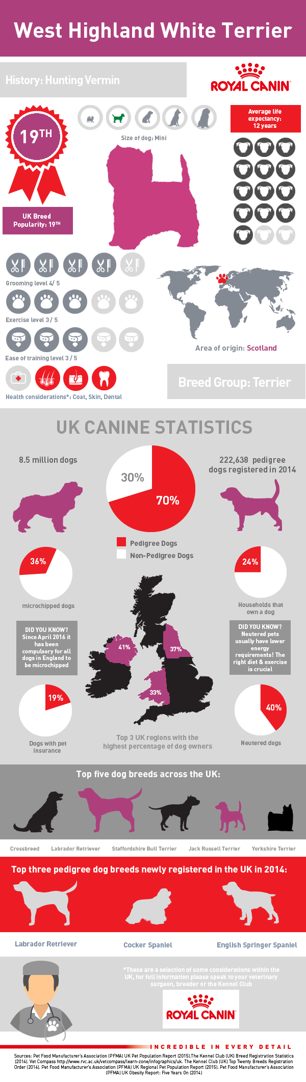 infographic-west-highland-white-terrier