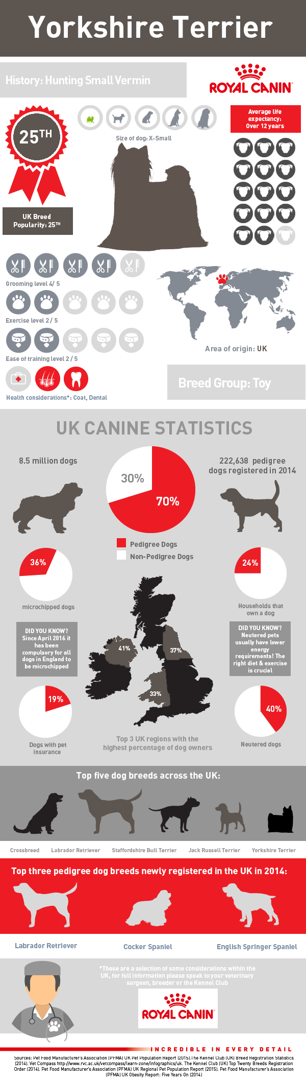 infographic-yorkshire-terrier
