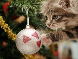 tabby cat christmas decoration
