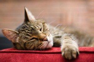 istock_tabby-cat-300x199