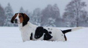 snow-dog-300x164