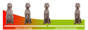 weight loss dogs