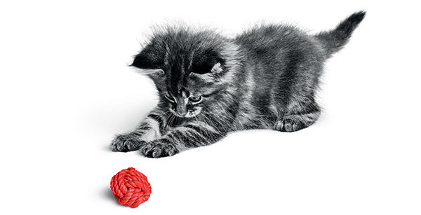kitten red wool
