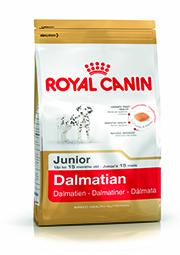 BHN Dalmatian Junior Packshot (1)