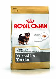 BHN Yorkshire Terrier Junior Packshot