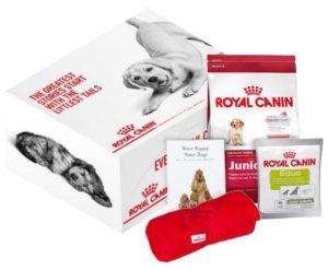 Breeder Presentation puppy box with contents