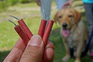 Dog Fireworks