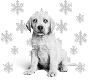 dog with snowflakes