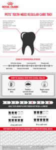 dental infographic