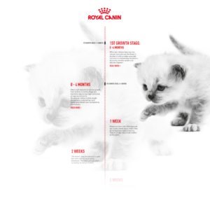 Your Kitten's Development - Cat Timeline