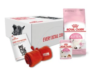 Assorted kitten food products