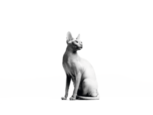 SPHYNX ADULT black and white