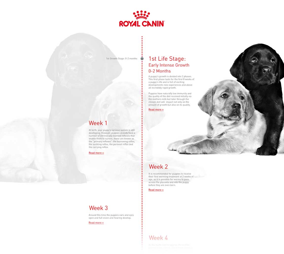 Puppy Timeline Preview