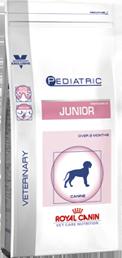 Pediatric Junior Dog