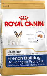 French Bulldog Junior